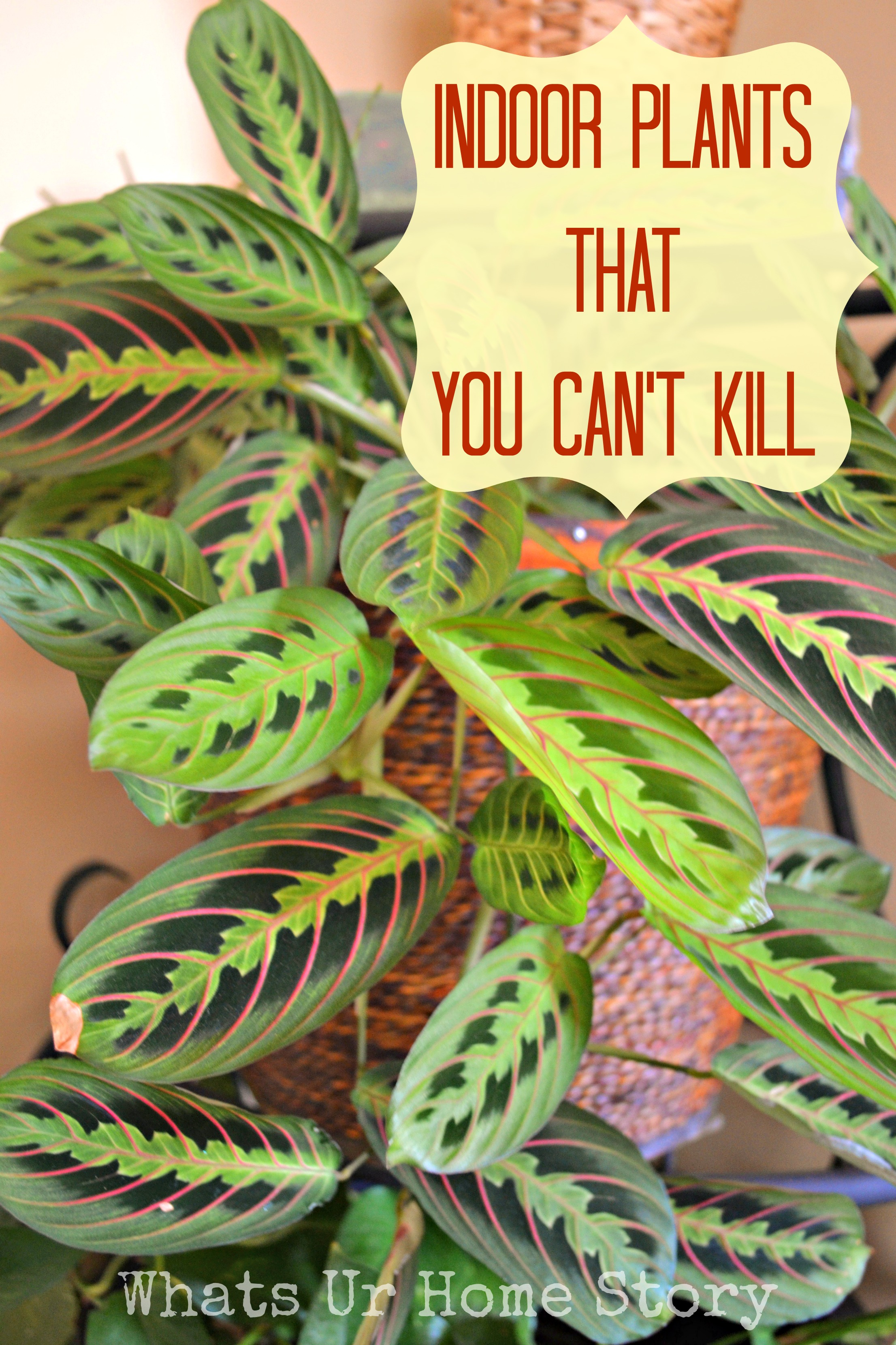 Indoor Plants that You Can't Kill