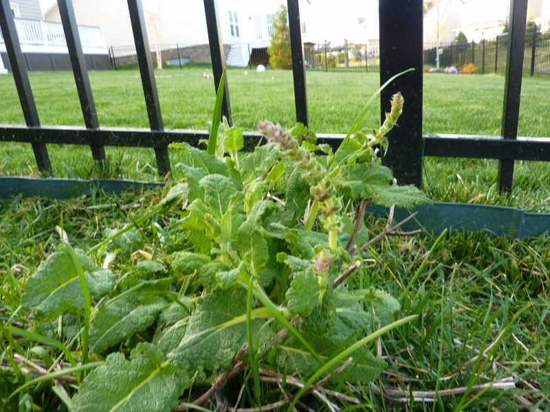 My Garden is Waking Up!