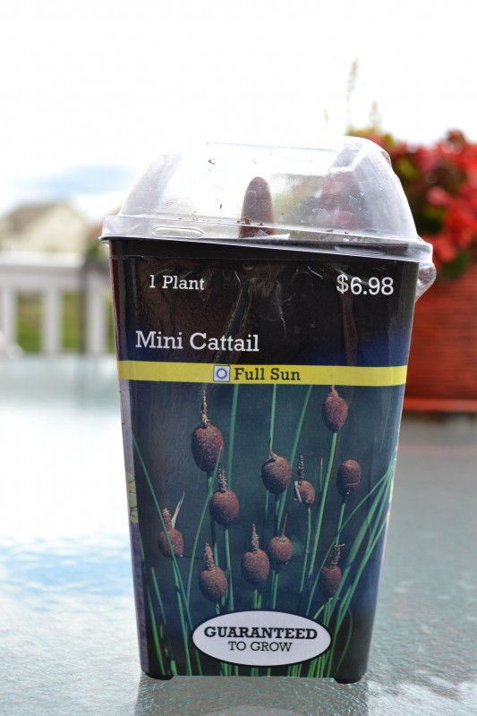 Growing Water Lily in a Container