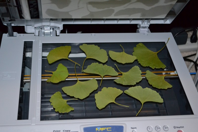 Make Your Own Fabric from Leaves