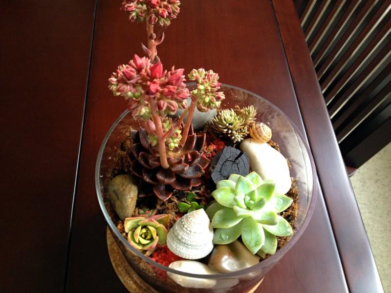 Reader Showcase   Gardening