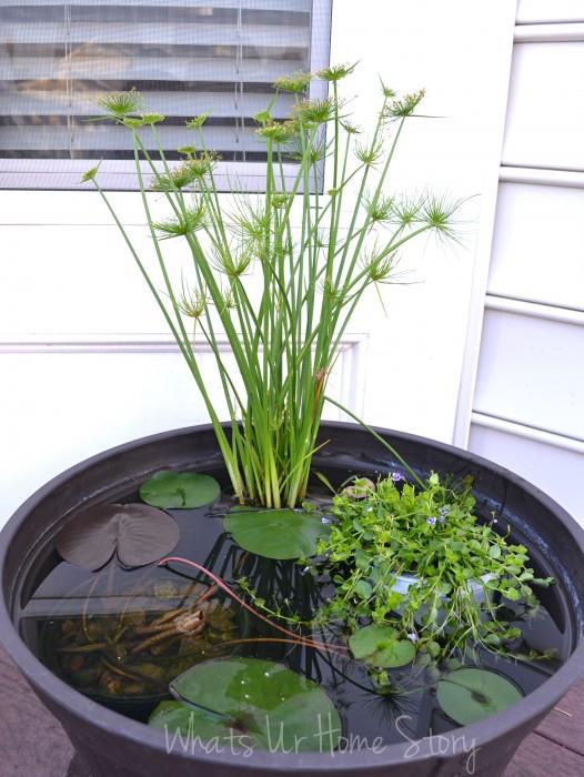 Container Water Garden Progress Report