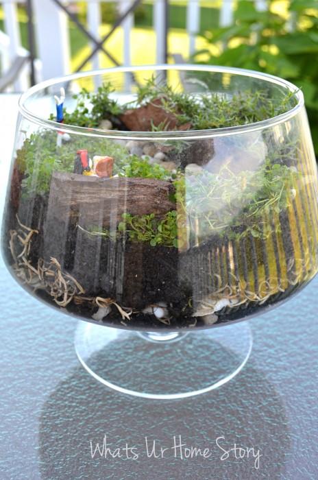 Miniature Garden Terrarium Whats Ur Home Story
