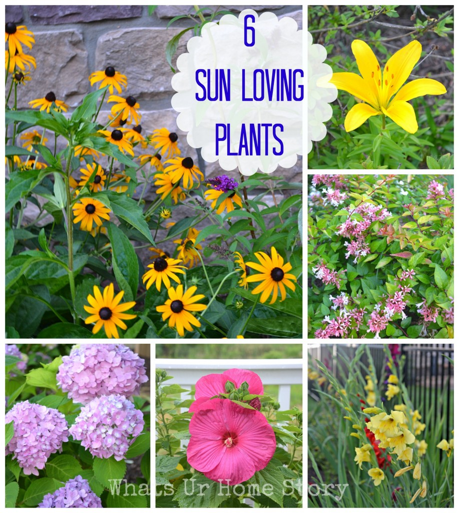 Garden Talk   6 Sun Loving Plants