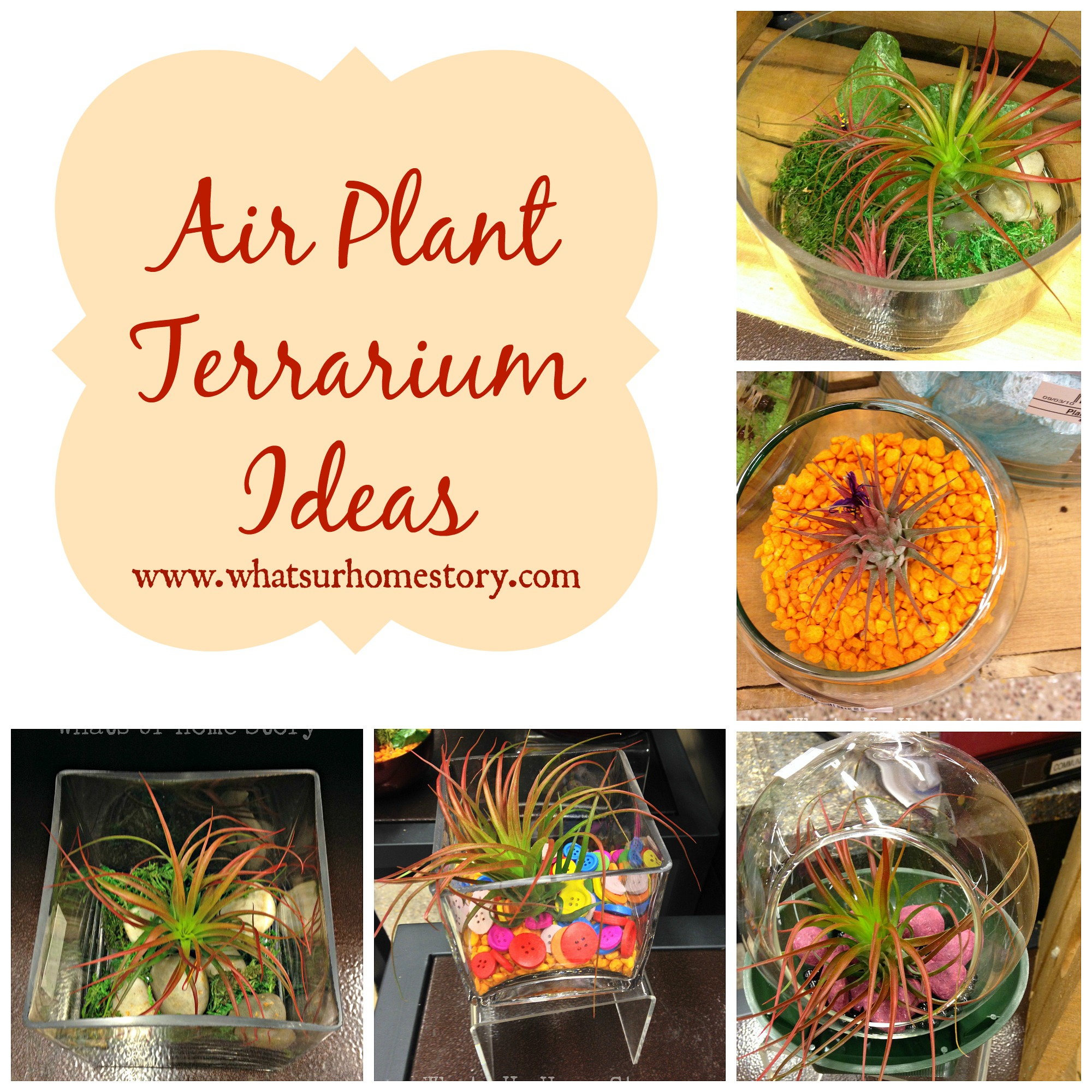 Air Plant Terrarium Air Plant Terrarium Ideas Whats Ur Home Story