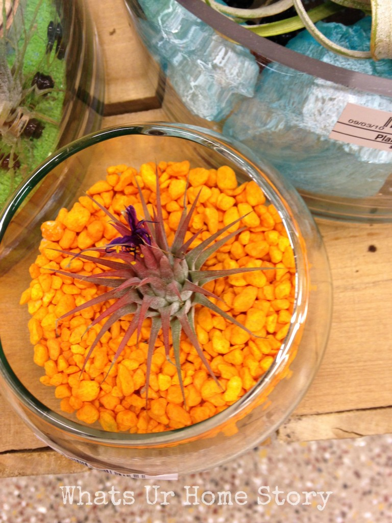 Air Plant Terrarium Ideas