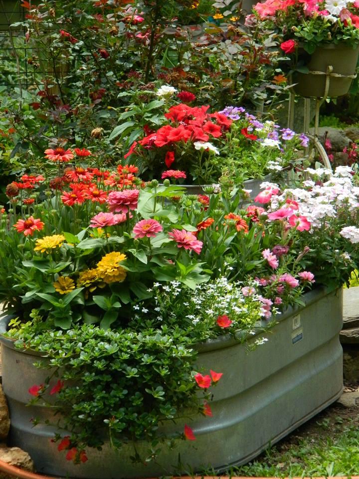 annuals in a tub
