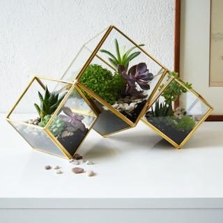 cube terrariums