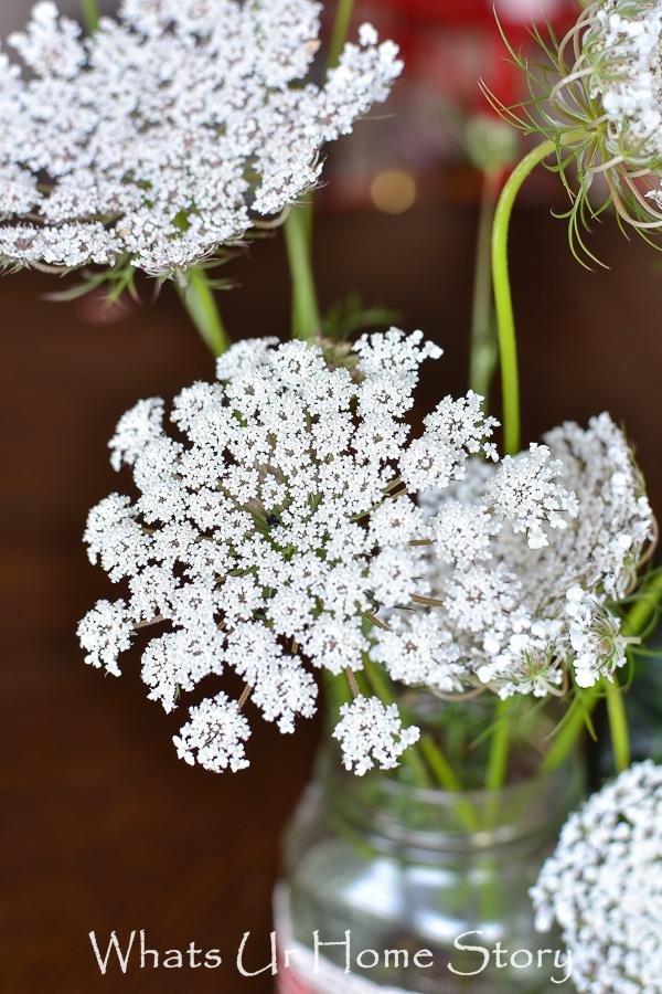 Flower Power   Queen Annes Lace