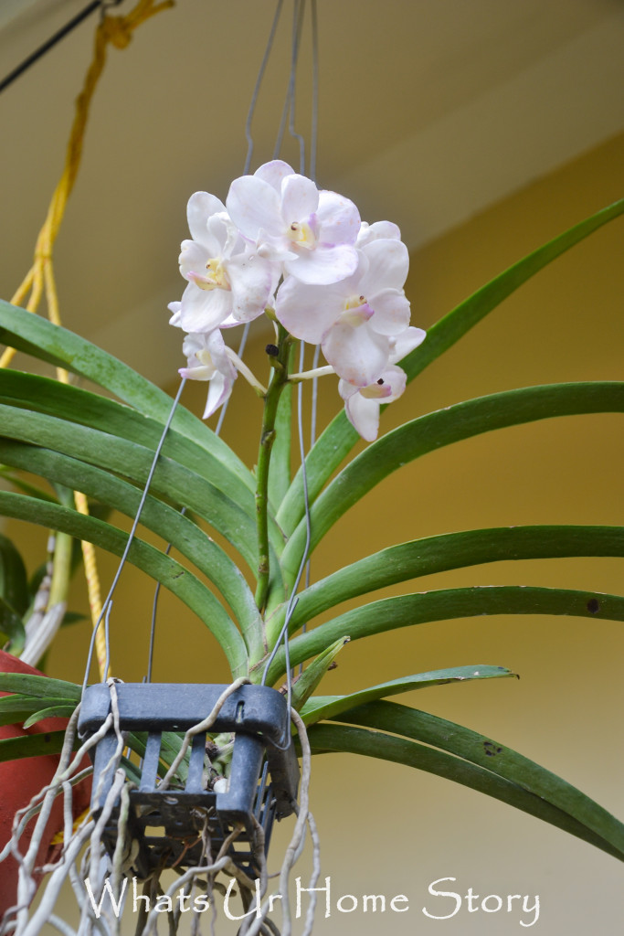 My Moms Orchids