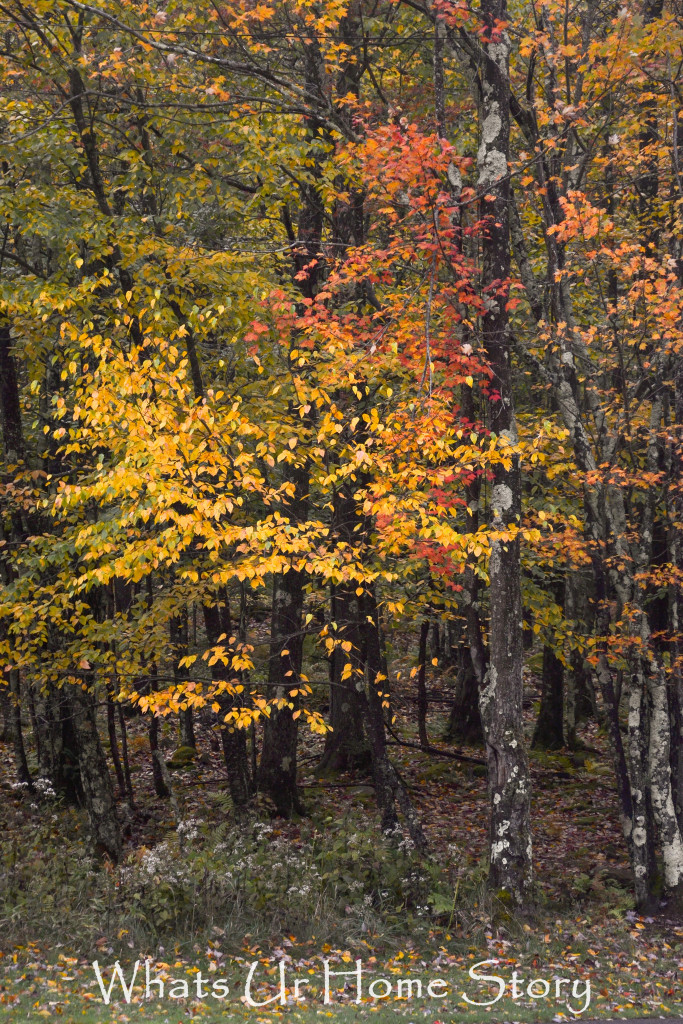 Fall Color in Canaan Valley, West Virginia