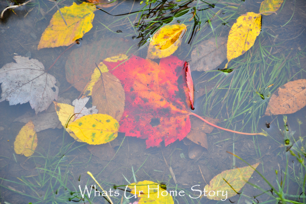 Fall Color in Canaan Valley, West Virginia
