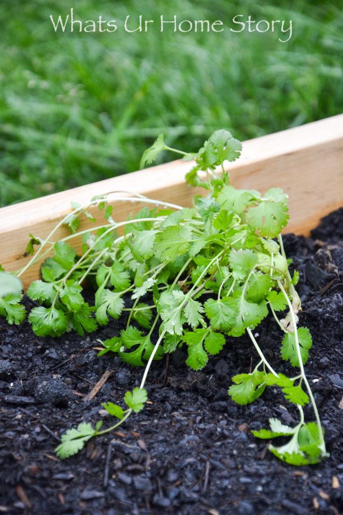 Vegetable Garden Beds Galore