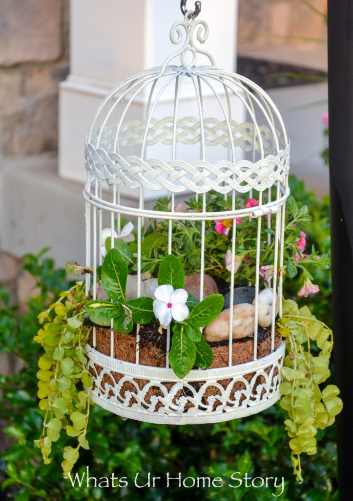 6 Easy Container Garden Ideas for the Lazy Gardener