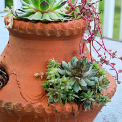 container garden ideas hens and chicks in a strawberry pot