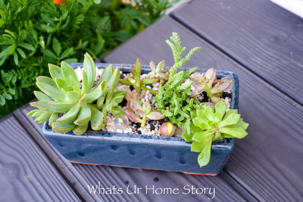 How to Get Succulents for Cheap