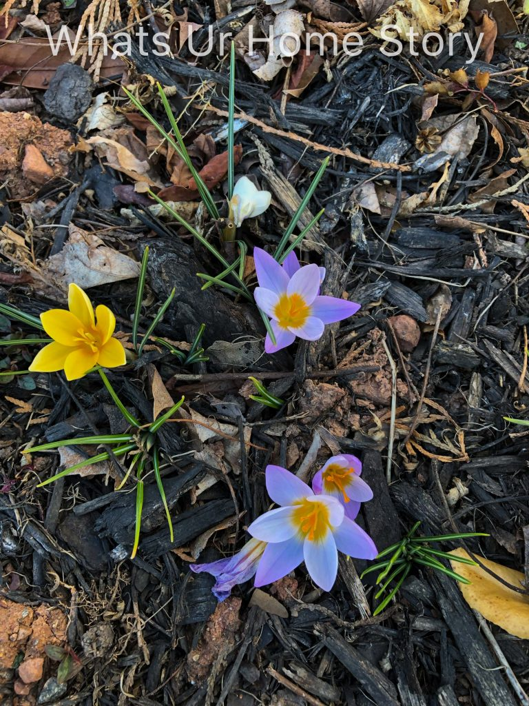 Early Spring Flowers From My Garden
