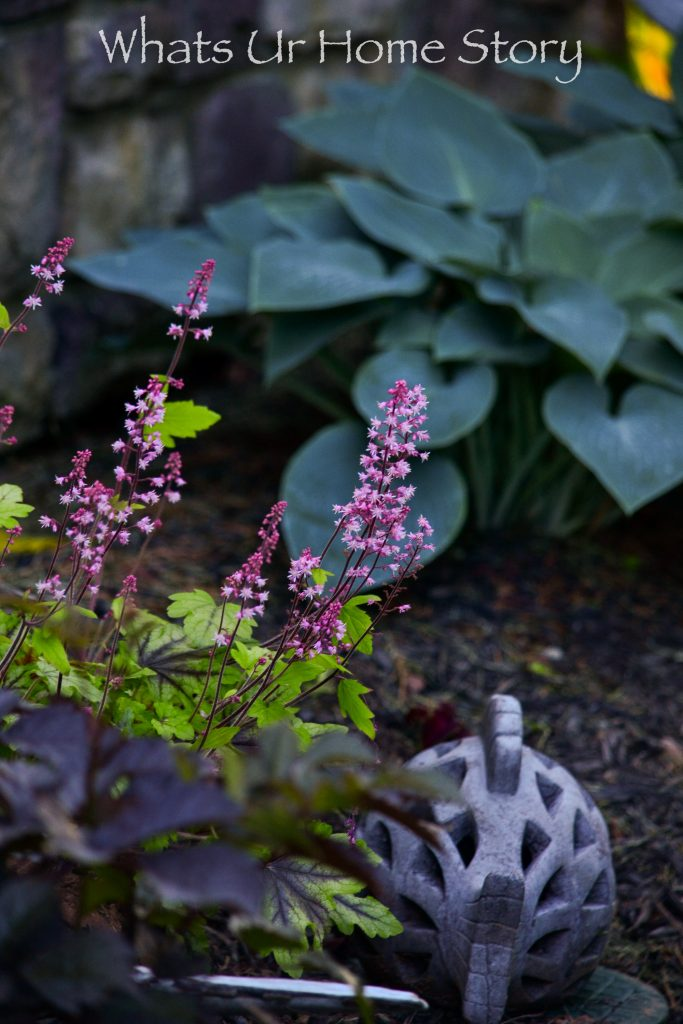 10 Best Perennials for Shade