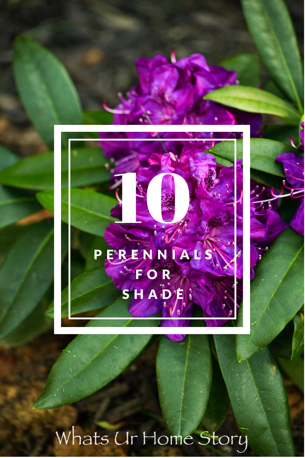 10 Best Perennials For Shade Whats Ur Home Story
