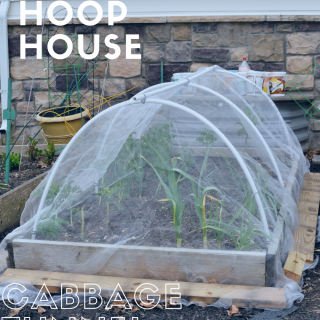 DIY Insect Hoop House