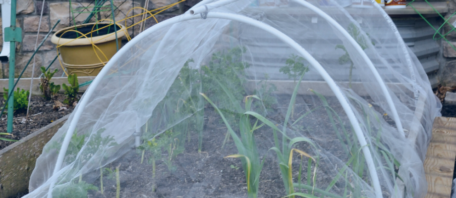 DIY Insect Hoop House or Cabbage Tunnel