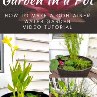 DIY Water Garden In a Pot