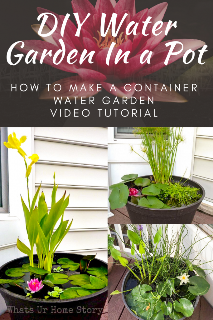 Water Garden in a Pot v8 & My YouTube Channels