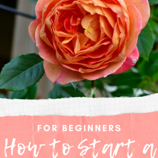 A Beginner's Guide - How to Start a Flower Garden