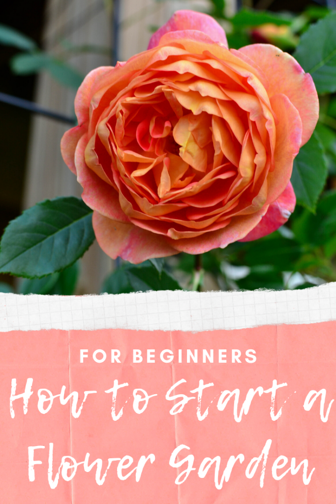 How to Start a Flower Garden for Beginners