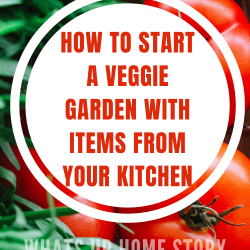 How to start a vegetable garden with items in your kitchen