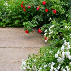 Summer Garden Tour 2020-Zen garden with roses - Icy drift rose and red carpet rose