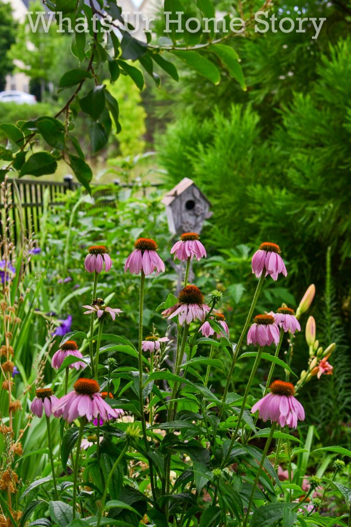 July Garden Tour   Summer Cottage Garden 2020