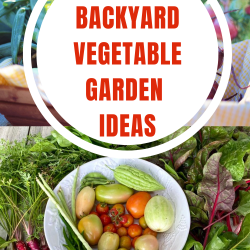 Small backyard vegetable garden ideas