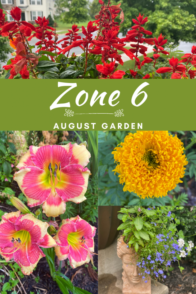 Late Summer Garden Tour