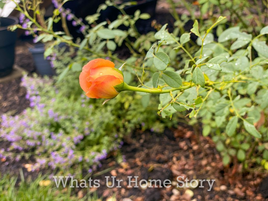 Early Fall Garden Tour