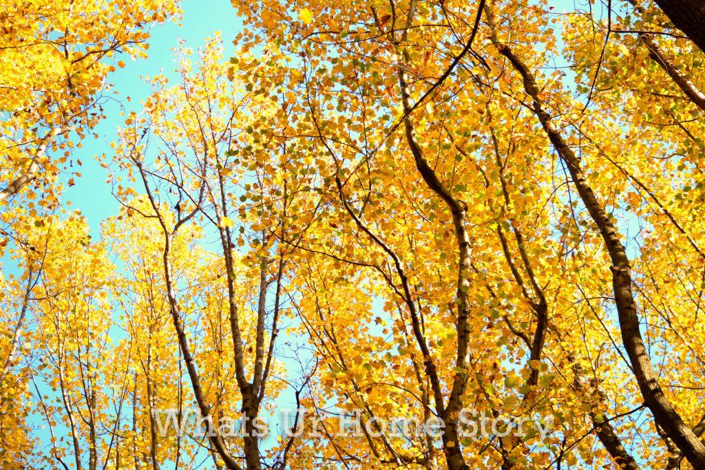 Fall Color 2020: Skyline Drive