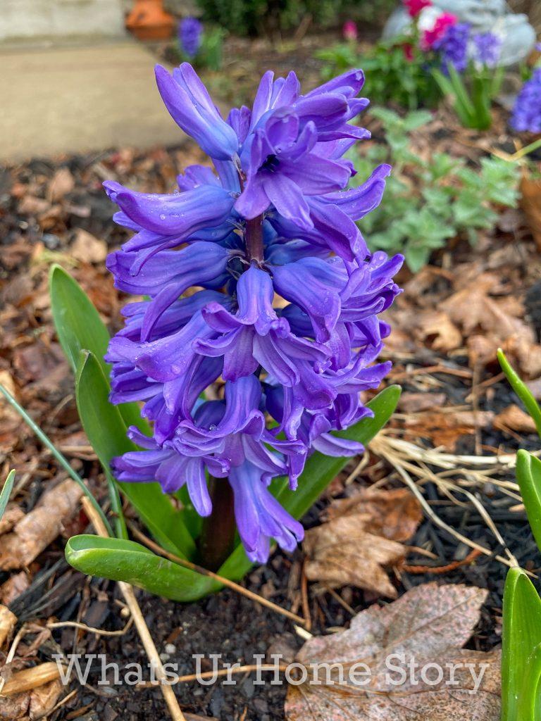 Early Spring Garden 2021